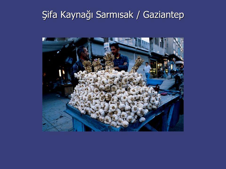 Şifa Kaynağı Sarmısak / Gaziantep
