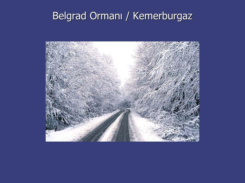 Belgrad Ormanı / Kemerburgaz