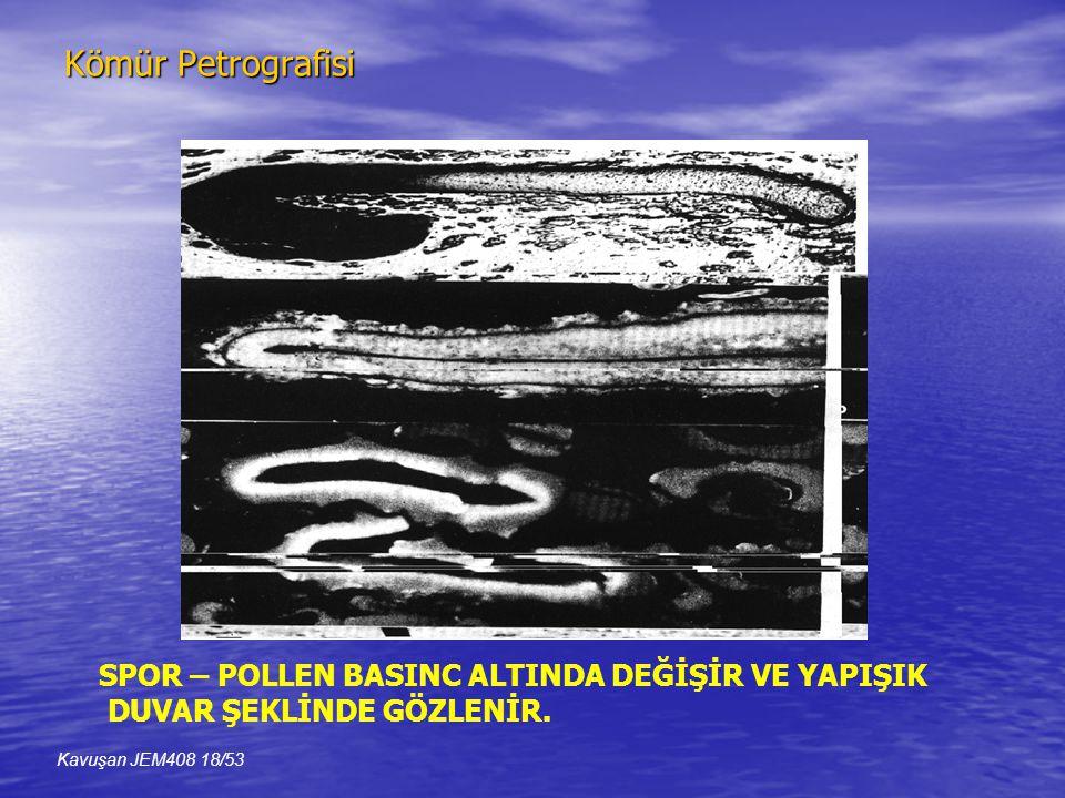 Kömür Petrografisi SPOR – POLLEN BASINC ALTINDA DEĞİŞİR VE YAPIŞIK DUVAR ŞEKLİNDE GÖZLENİR.