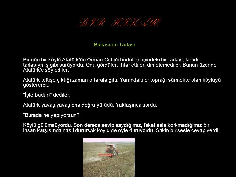 BIR HIKAYE Babasının Tarlası Bir gün bir köylü Atatürk ün Orman Çiftliği hudutları içindeki bir tarlayı, kendi tarlasıymış gibi sürüyordu.