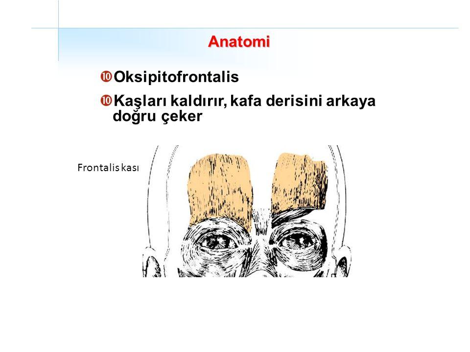Anatomi  Oksipitofrontalis  Kaşları kaldırır, kafa derisini arkaya doğru çeker Frontalis kası