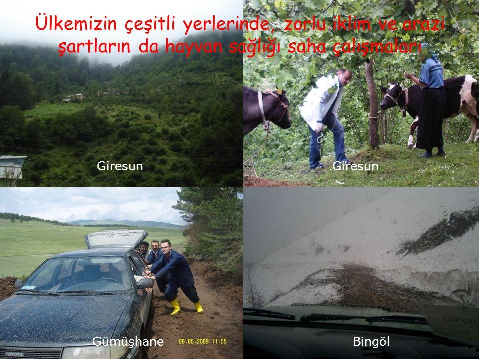 9 Ülkemizin çeşitli yerlerinde, zorlu iklim ve arazi şartların da hayvan sağlığı saha çalışmaları Giresun GümüşhaneBingöl