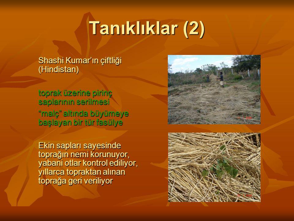 Tanıklıklar (2) Shashi Kumar'ın çiftliği (Hindistan) toprak üzerine pirinç saplarının serilmesi malç altında büyümeye başlayan bir tür fasülye Ekin sapları sayesinde toprağın nemi korunuyor, yabani otlar kontrol ediliyor, yıllarca topraktan alınan toprağa geri veriliyor
