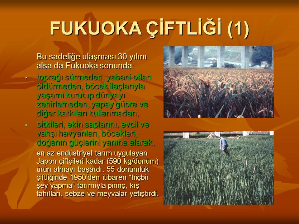 FUKUOKA ÇİFTLİĞİ (1) Bu sadeliğe ulaşması 30 yılını alsa da Fukuoka sonunda: • toprağı sürmeden, yabani otları öldürmeden, böcek ilaçlarıyla yaşamı kurutup dünyayı zehirlemeden, yapay gübre ve diğer katkıları kullanmadan, • bitkileri, ekin saplarını, evcil ve vahşi havyanları, böcekleri, doğanın güçlerini yanına alarak, en az endüstriyel tarım uygulayan Japon çiftçileri kadar (590 kg/dönüm) ürün almayı başardı.