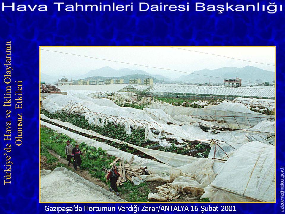 Hortumun Yıktığı Ağaçlar/TOKAT 28 Mayıs 2001 Türkiye'de Hava ve İklim Olaylarının Olumsuz Etkileri