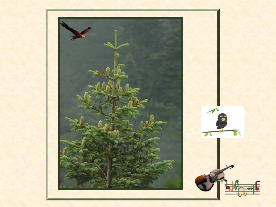 Kazdağları'nın Endemik Bitkileri Türkiye'nin en fazla oksijen üreten bölgesi Kaz Dağıdır. Eski adı İDA Dağıdır Kazdağları'nda 32 tane endemik (Dünyada
