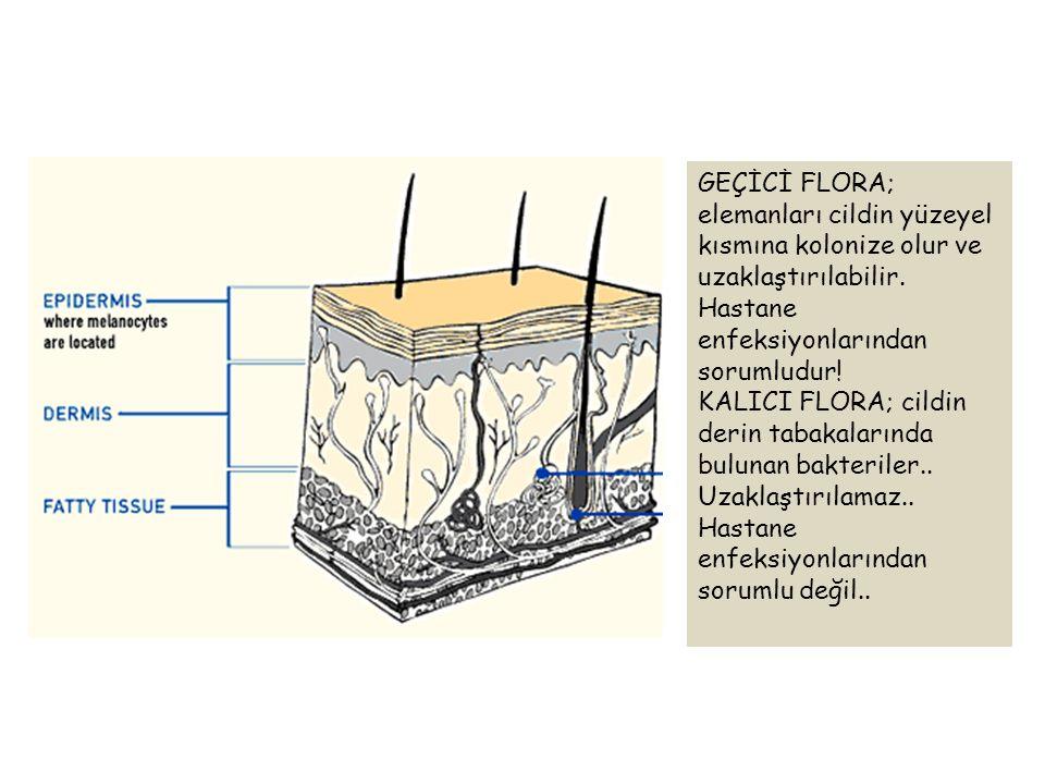 GEÇİCİ FLORA; elemanları cildin yüzeyel kısmına kolonize olur ve uzaklaştırılabilir. Hastane enfeksiyonlarından sorumludur! KALICI FLORA; cildin derin