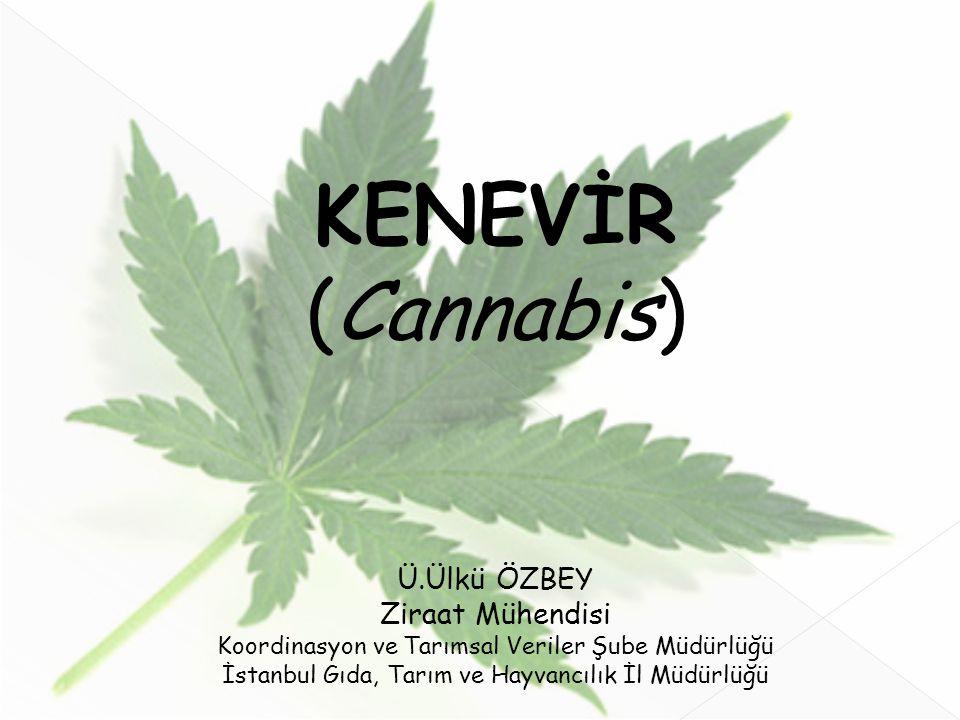 KENEVİR (Cannabis) Ü.Ülkü ÖZBEY Ziraat Mühendisi Koordinasyon ve Tarımsal Veriler Şube Müdürlüğü İstanbul Gıda, Tarım ve Hayvancılık İl Müdürlüğü