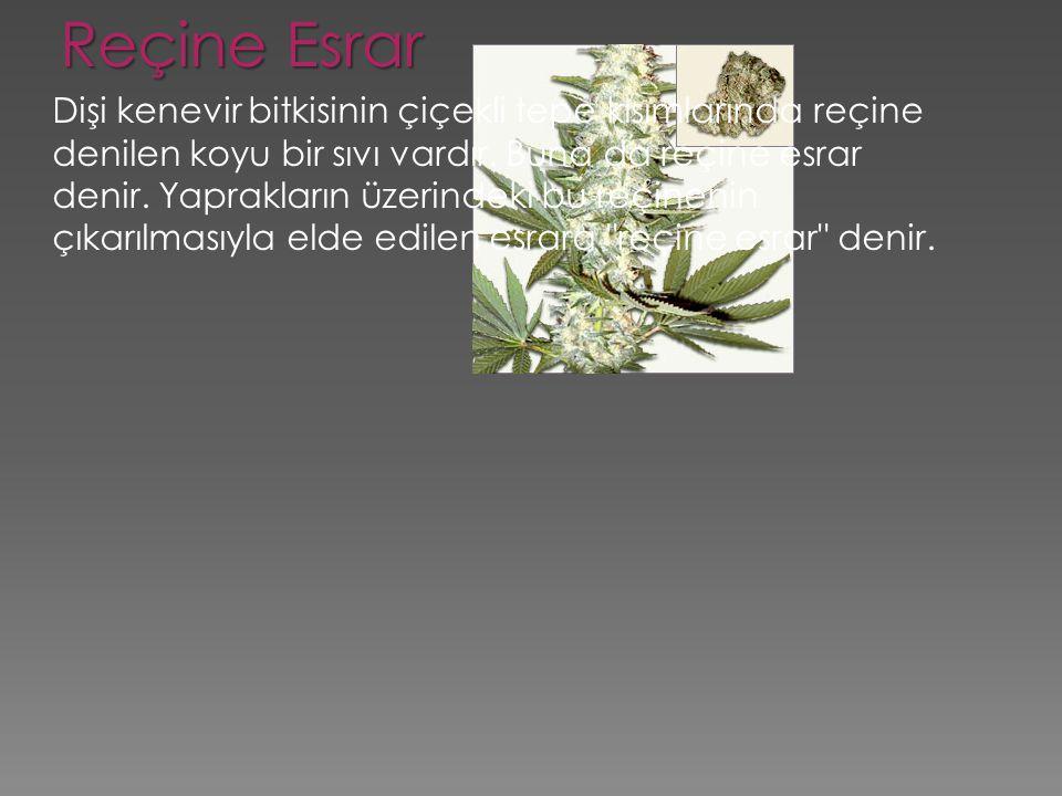 Reçine Esrar Dişi kenevir bitkisinin çiçekli tepe kısımlarında reçine denilen koyu bir sıvı vardır. Buna da reçine esrar denir. Yaprakların üzerindeki