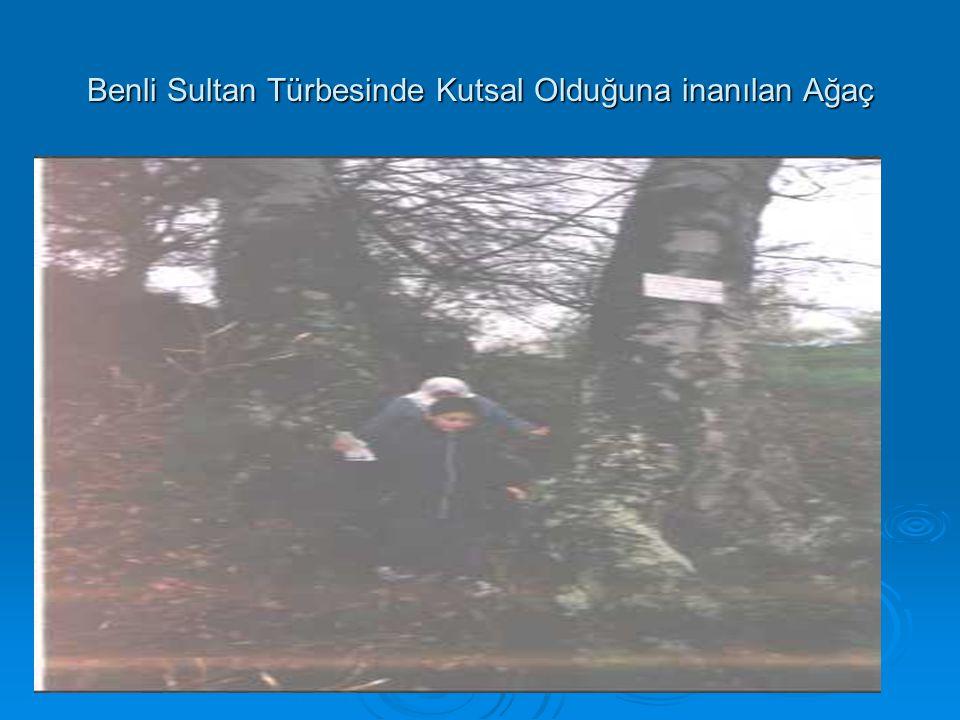 Benli Sultan Türbesinde Kutsal Olduğuna inanılan Ağaç