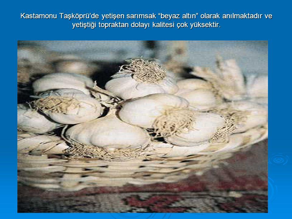 """Kastamonu Taşköprü'de yetişen sarımsak """"beyaz altın"""" olarak anılmaktadır ve yetiştiği topraktan dolayı kalitesi çok yüksektir."""