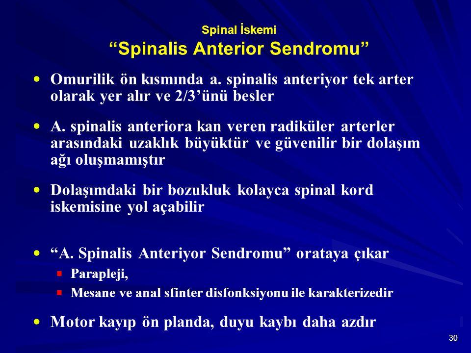 """30 Spinal İskemi """"Spinalis Anterior Sendromu""""  Omurilik ön kısmında a. spinalis anteriyor tek arter olarak yer alır ve 2/3'ünü besler  A. spinalis a"""
