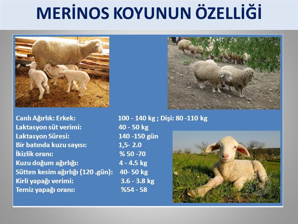 Canlı Ağırlık: Erkek: 100 - 140 kg ; Dişi: 80 -110 kg Laktasyon süt verimi: 40 - 50 kg Laktasyon Süresi: 140 -150 gün Bir batında kuzu sayısı: 1,5- 2.