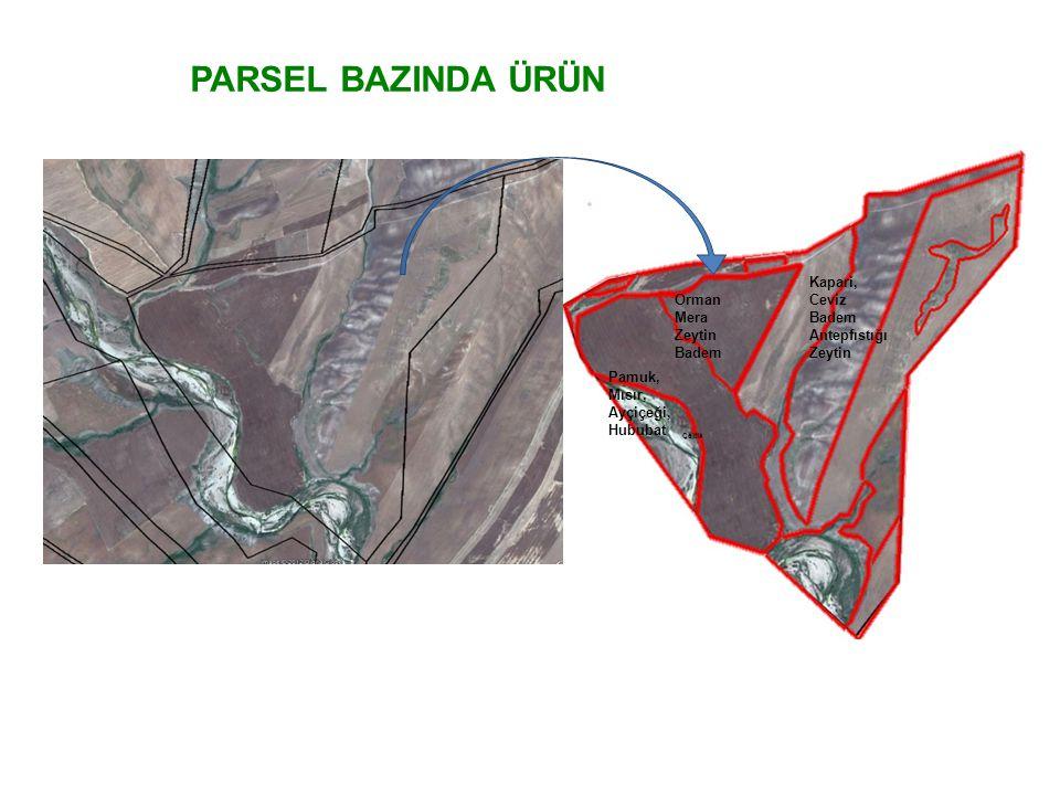Orman Mera Zeytin Badem Çeltik Kapari, Ceviz Badem Antepfıstığı Zeytin Pamuk, Mısır, Ayçiçeği, Hububat PARSEL BAZINDA ÜRÜN