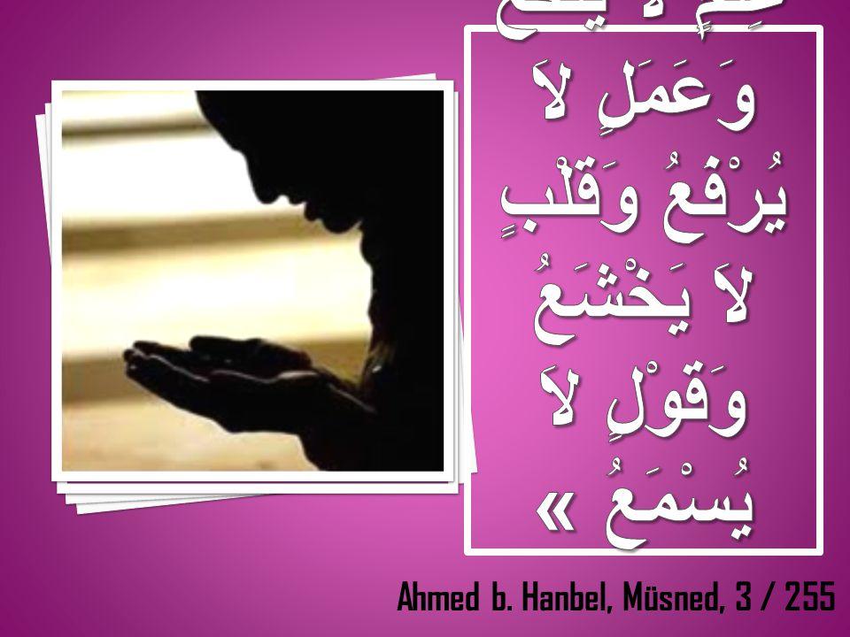 Ahmed b. Hanbel, Müsned, 3 / 255