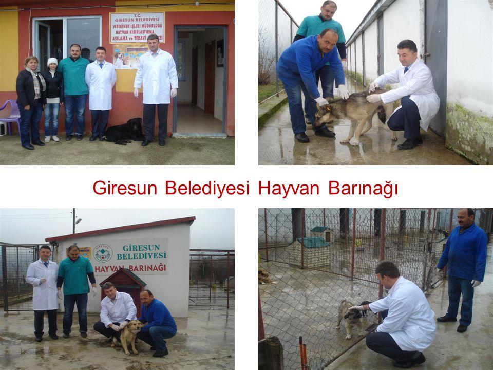 Giresun Belediyesi Hayvan Barınağı