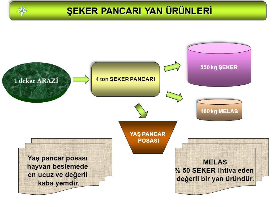 ŞEKER PANCARI YAN ÜRÜNLERİ ŞEKER PANCARI YAN ÜRÜNLERİ 550 kg ŞEKER 4 ton ŞEKER PANCARI 160 kg MELAS MELAS % 50 ŞEKER ihtiva eden değerli bir yan üründür.