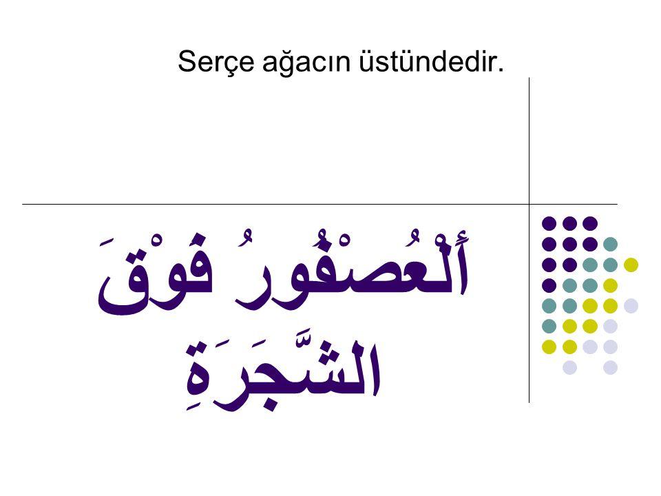 أَلْعُصْفُورُ فَوْقَ الشَّجَرَةِ Serçe ağacın üstündedir.