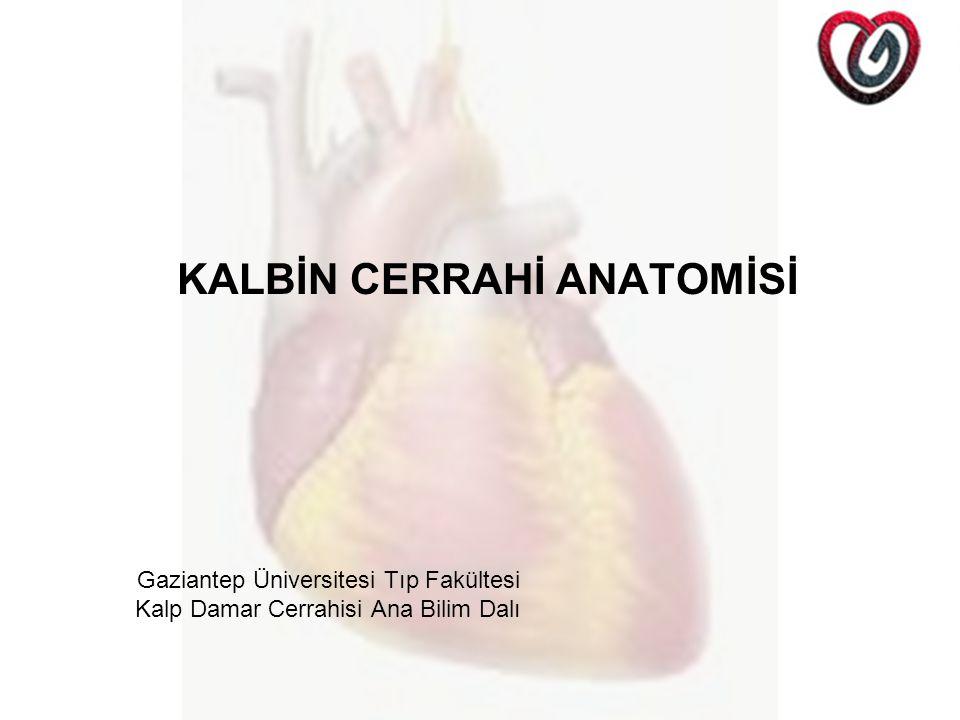 Gaziantep Üniversitesi Tıp Fakültesi Kalp Damar Cerrahisi Ana Bilim Dalı KALBİN CERRAHİ ANATOMİSİ