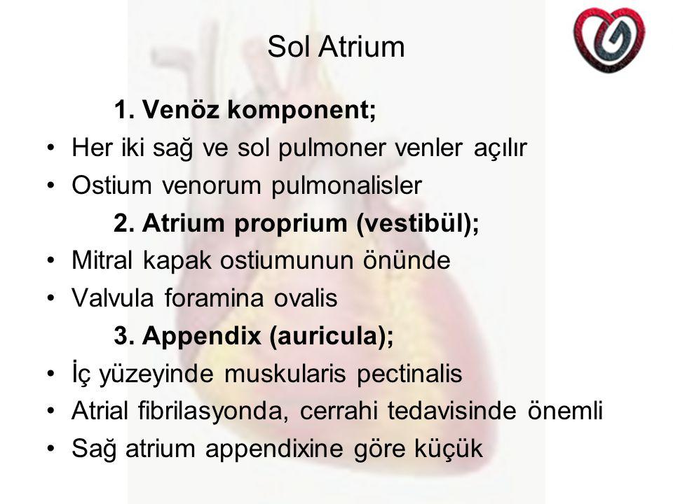 Sol Atrium 1. Venöz komponent; Her iki sağ ve sol pulmoner venler açılır Ostium venorum pulmonalisler 2. Atrium proprium (vestibül); Mitral kapak osti