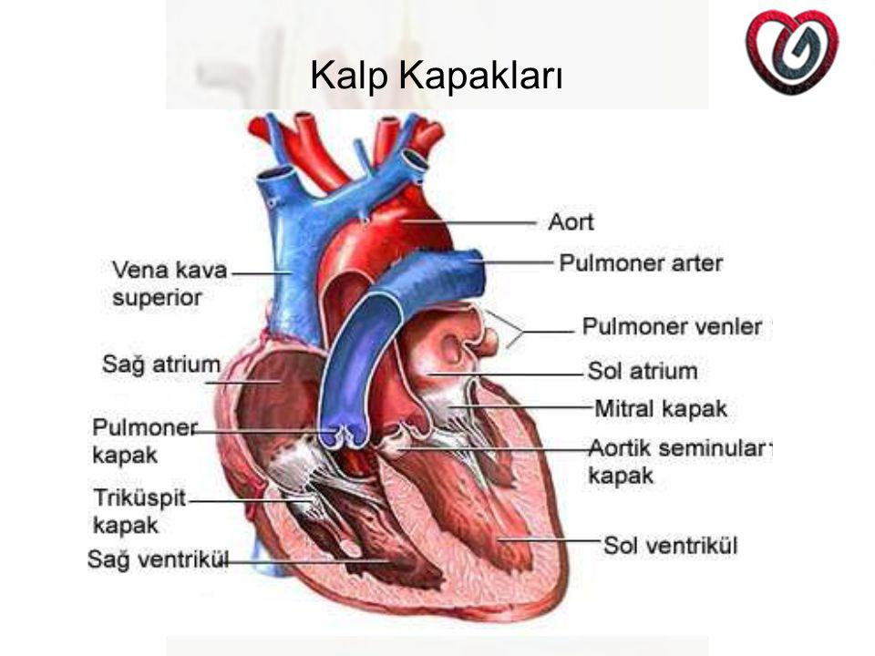 Kalp Kapakları