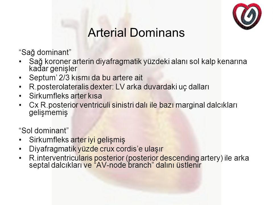 Arterial Dominans Sağ dominant Sağ koroner arterin diyafragmatik yüzdeki alanı sol kalp kenarına kadar genişler Septum' 2/3 kısmı da bu artere ait R.posterolateralis dexter: LV arka duvardaki uç dalları Sirkumfleks arter kısa Cx R.posterior ventriculi sinistri dalı ile bazı marginal dalcıkları gelişmemiş Sol dominant Sirkumfleks arter iyi gelişmiş Diyafragmatik yüzde crux cordis'e ulaşır R.interventricularis posterior (posterior descending artery) ile arka septal dalcıkları ve AV-node branch dalını üstlenir