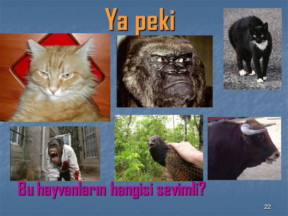 22 Ya peki Bu hayvanların hangisi sevimli?