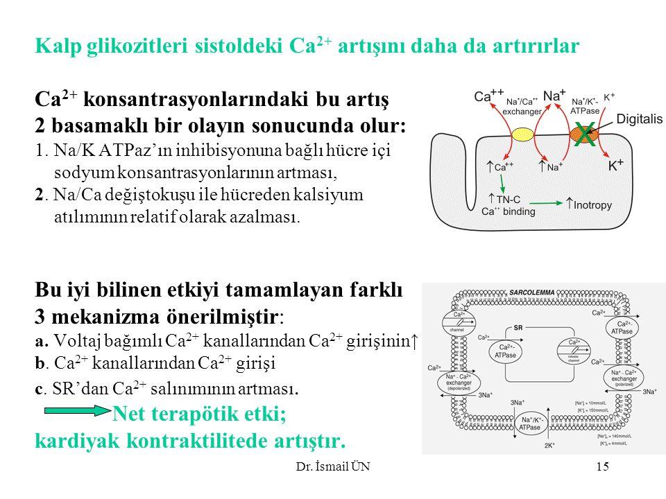 Dr. İsmail ÜN15 Kalp glikozitleri sistoldeki Ca 2+ artışını daha da artırırlar Ca 2+ konsantrasyonlarındaki bu artış 2 basamaklı bir olayın sonucunda