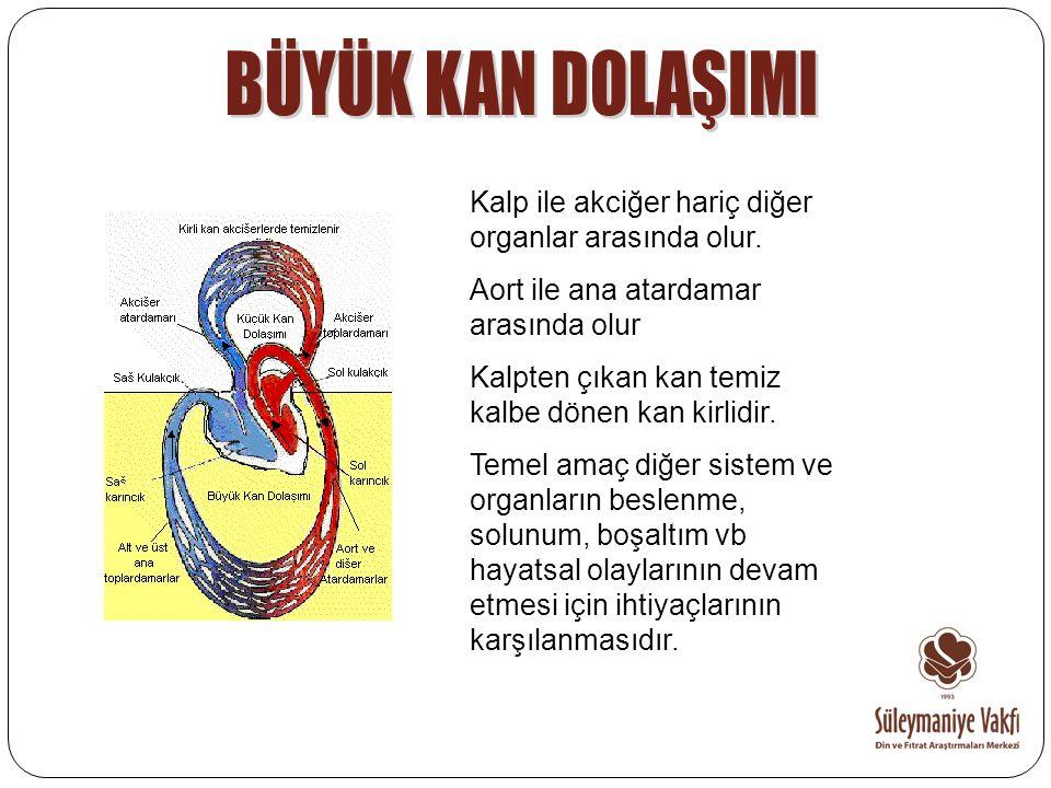 Kalp ile akciğer hariç diğer organlar arasında olur. Aort ile ana atardamar arasında olur Kalpten çıkan kan temiz kalbe dönen kan kirlidir. Temel amaç