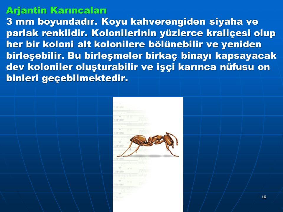 Arjantin Karıncaları 3 mm boyundadır.Koyu kahverengiden siyaha ve parlak renklidir.