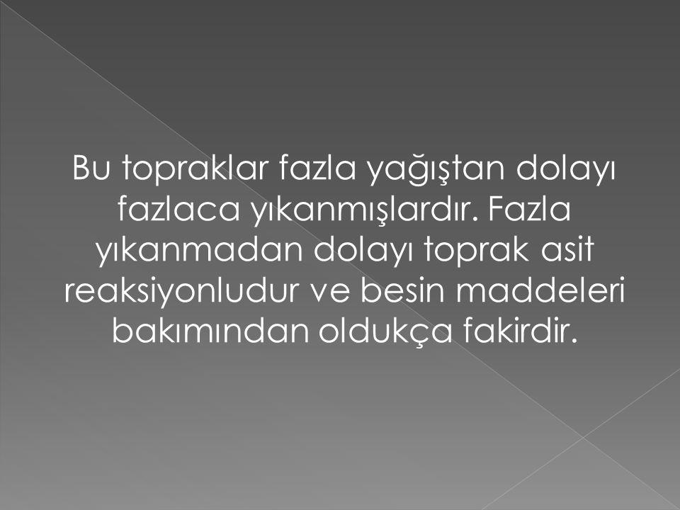 SİEROZEMLER Yıllık ortalama yağışın 300 mm'nin altında olduğu Konya ovasının doğu kesiminde görülen toprak çeşididir.
