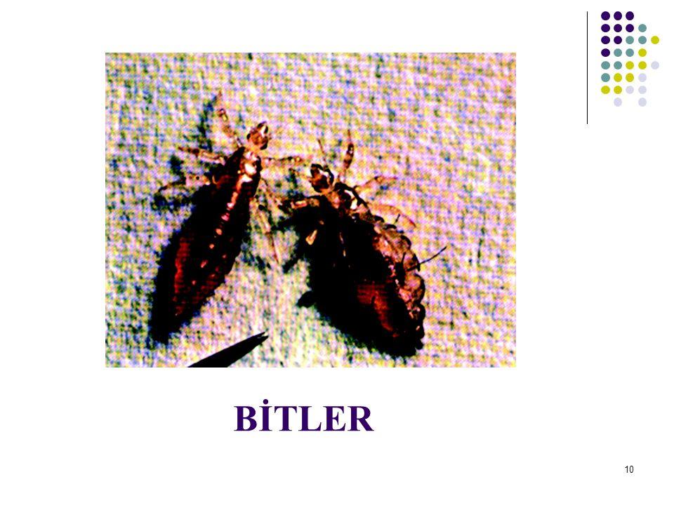 UYUZ Etkeni: Parazit.Bulaşma Yolu: Yakın vücut teması bulaşmada önemlidir.
