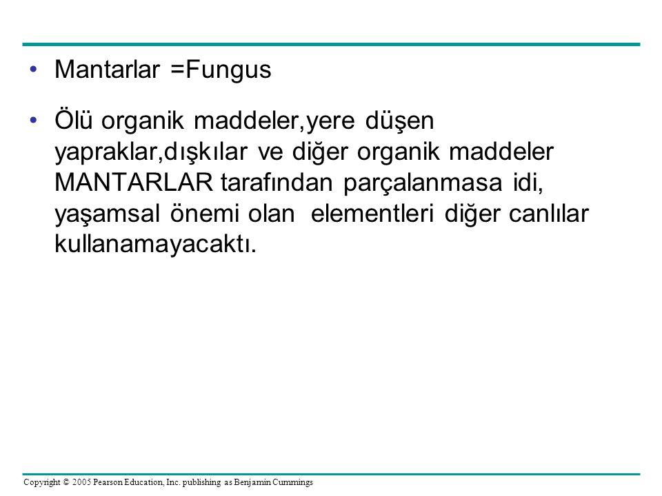 Copyright © 2005 Pearson Education, Inc. publishing as Benjamin Cummings Mantarlar =Fungus Ölü organik maddeler,yere düşen yapraklar,dışkılar ve diğer