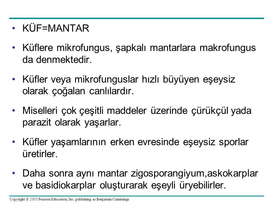 KÜF=MANTAR Küflere mikrofungus, şapkalı mantarlara makrofungus da denmektedir. Küfler veya mikrofunguslar hızlı büyüyen eşeysiz olarak çoğalan canlıla