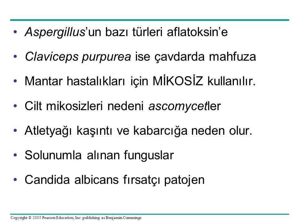 Aspergillus'un bazı türleri aflatoksin'e Claviceps purpurea ise çavdarda mahfuza Mantar hastalıkları için MİKOSİZ kullanılır. Cilt mikosizleri nedeni