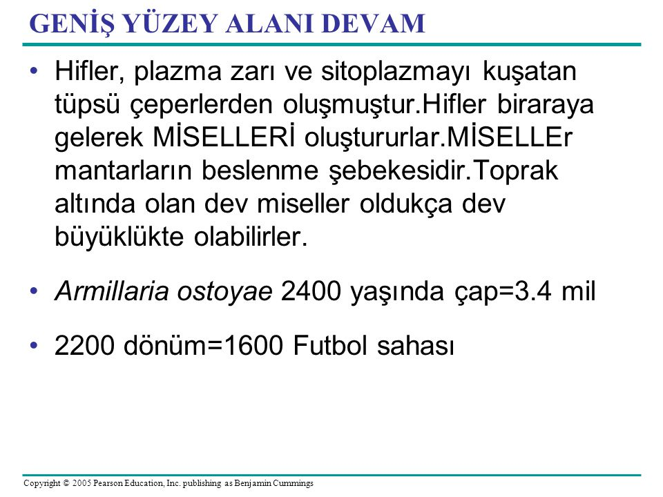 Copyright © 2005 Pearson Education, Inc. publishing as Benjamin Cummings GENİŞ YÜZEY ALANI DEVAM Hifler, plazma zarı ve sitoplazmayı kuşatan tüpsü çep