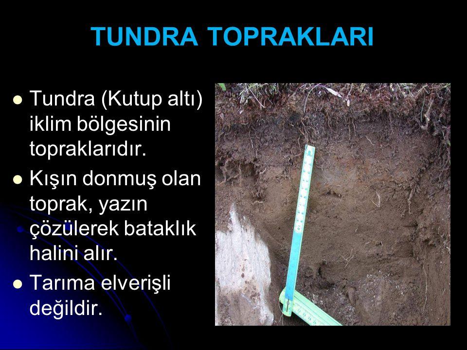 TUNDRA TOPRAKLARI Tundra (Kutup altı) iklim bölgesinin topraklarıdır. Kışın donmuş olan toprak, yazın çözülerek bataklık halini alır. Tarıma elverişli