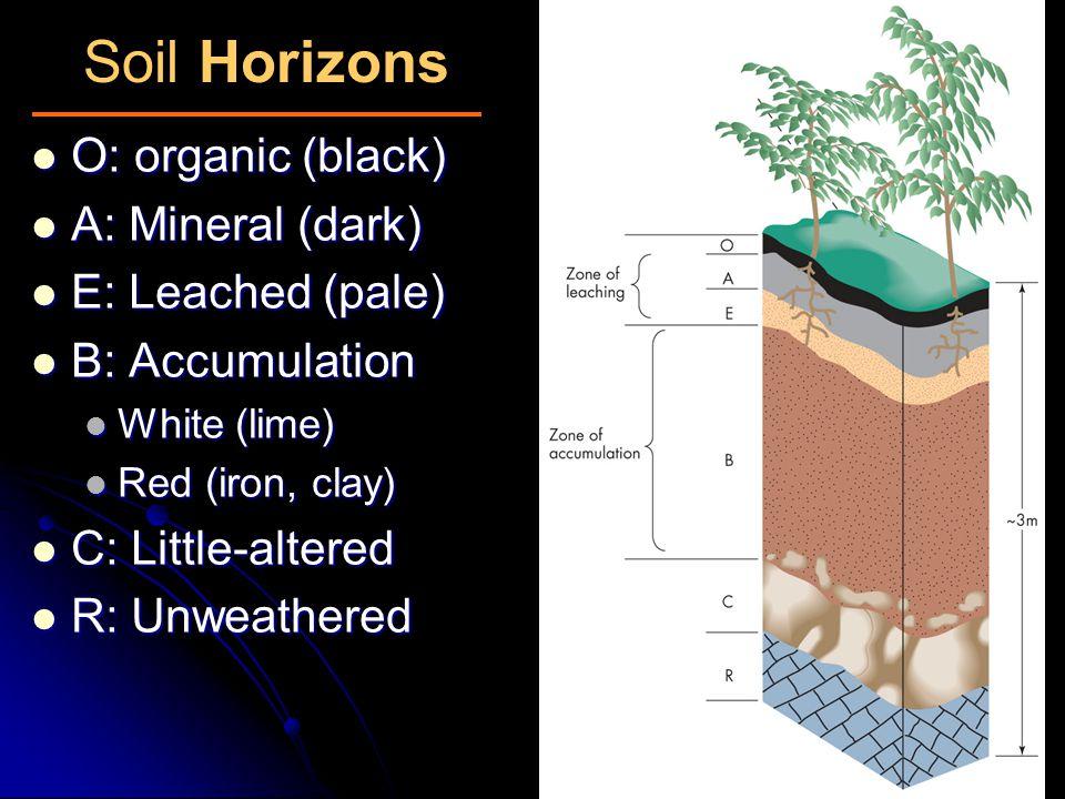 Soil Horizons O: organic (black) O: organic (black) A: Mineral (dark) A: Mineral (dark) E: Leached (pale) E: Leached (pale) B: Accumulation B: Accumul