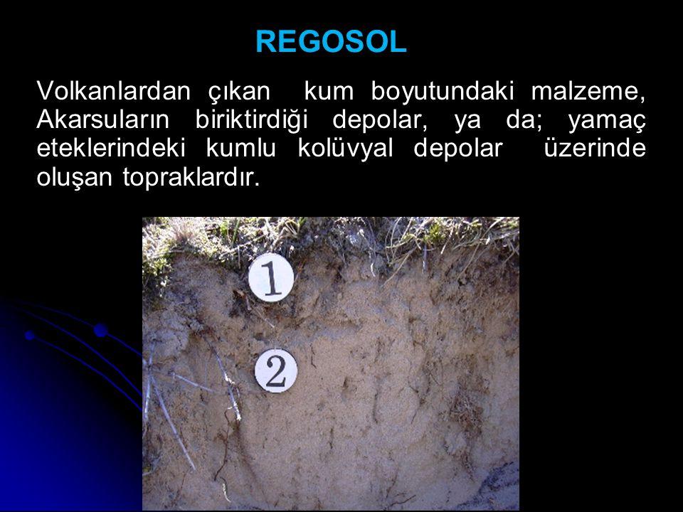 REGOSOL Volkanlardan çıkan kum boyutundaki malzeme, Akarsuların biriktirdiği depolar, ya da; yamaç eteklerindeki kumlu kolüvyal depolar üzerinde oluşa