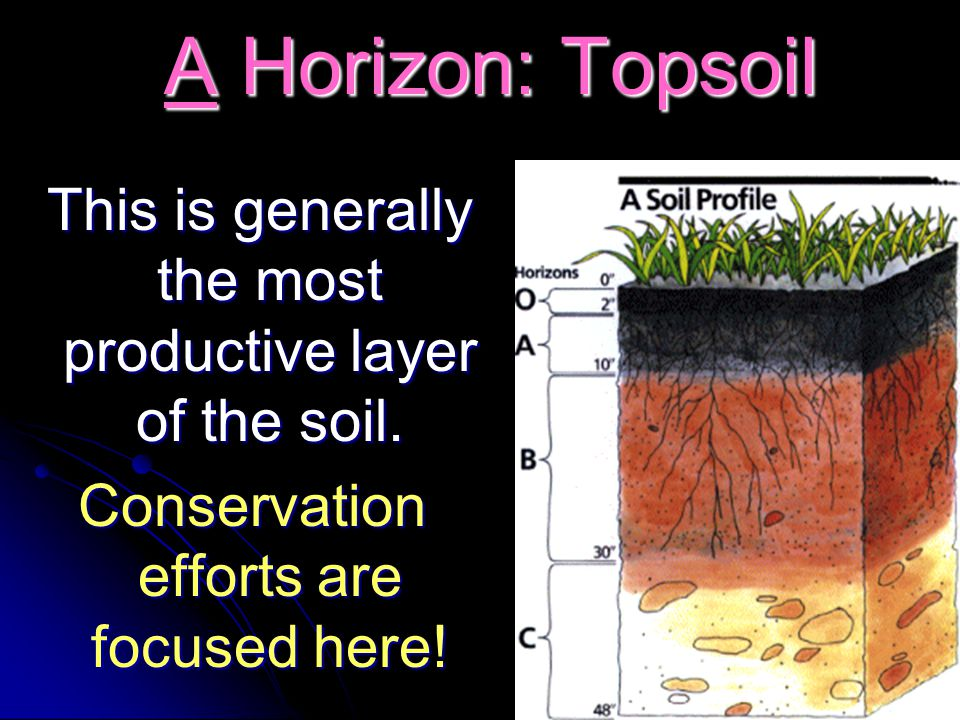 A Horizon: Topsoil A Horizon: Topsoil This is generally the most productive layer of the soil. This is generally the most productive layer of the soil
