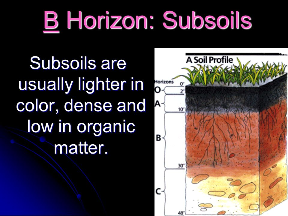 B Horizon: Subsoils B Horizon: Subsoils Subsoils are usually lighter in color, dense and low in organic matter. Subsoils are usually lighter in color,