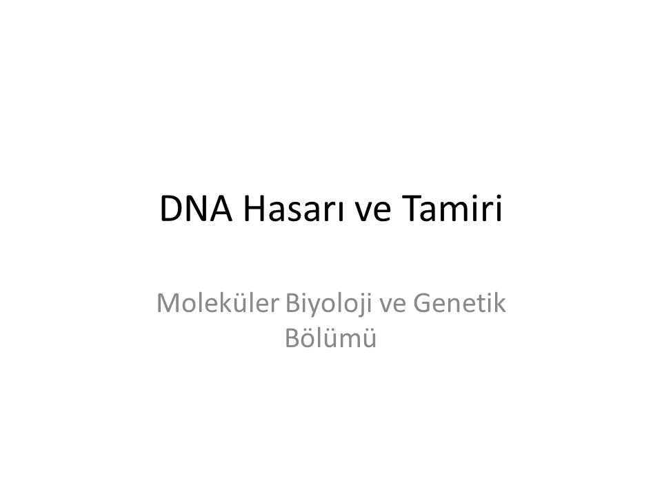 DNA Hasarı ve Tamiri Moleküler Biyoloji ve Genetik Bölümü