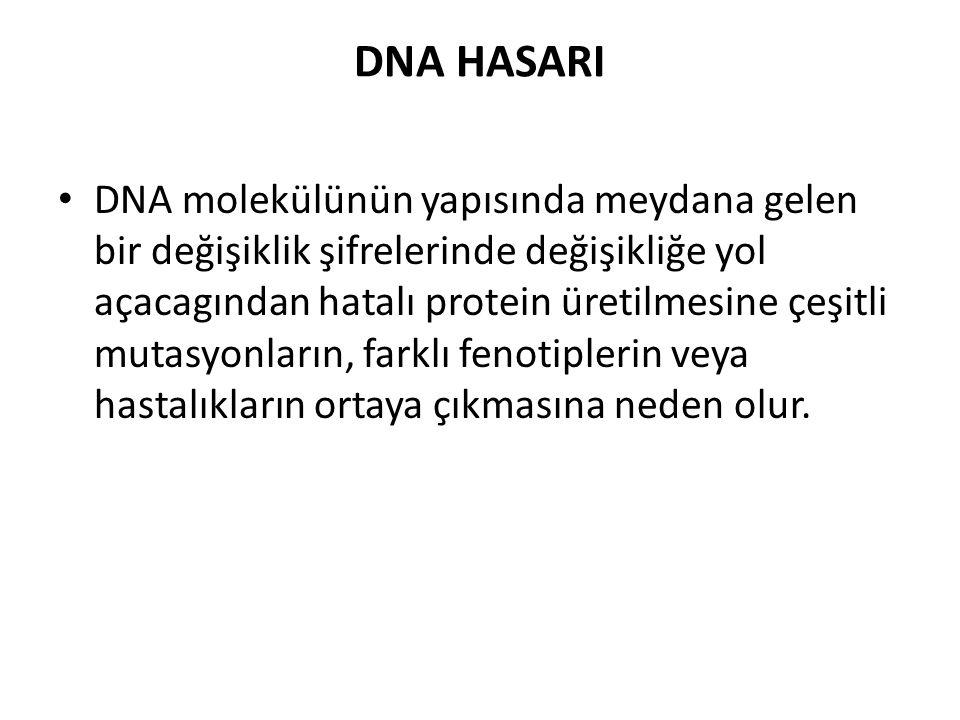 DNA HASARI DNA molekülünün yapısında meydana gelen bir değişiklik şifrelerinde değişikliğe yol açacagından hatalı protein üretilmesine çeşitli mutasyo