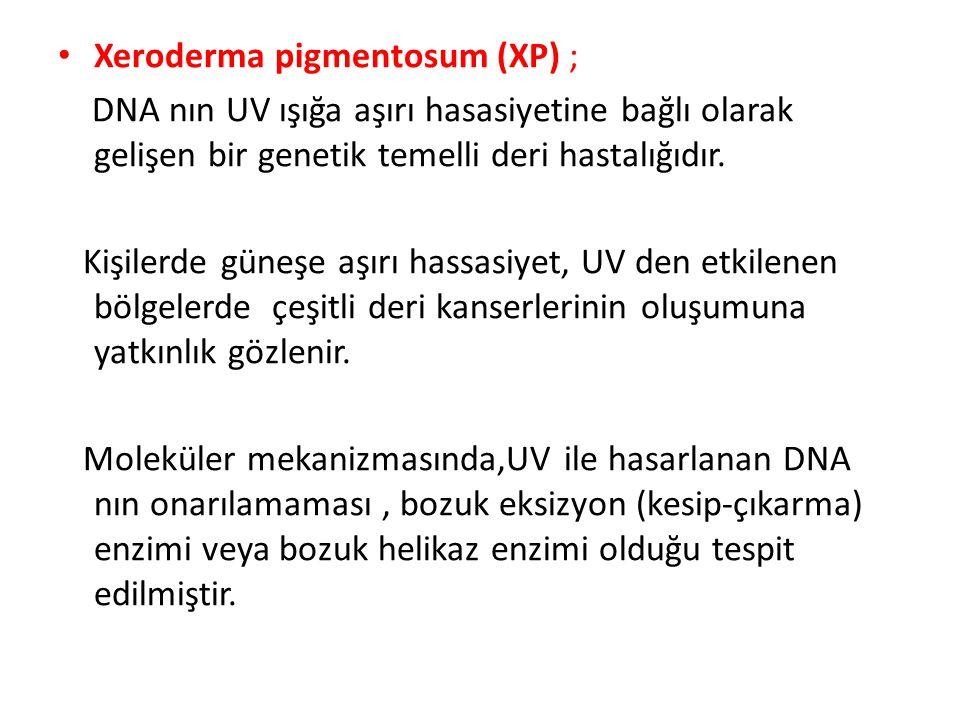 Xeroderma pigmentosum (XP) ; DNA nın UV ışığa aşırı hasasiyetine bağlı olarak gelişen bir genetik temelli deri hastalığıdır. Kişilerde güneşe aşırı ha