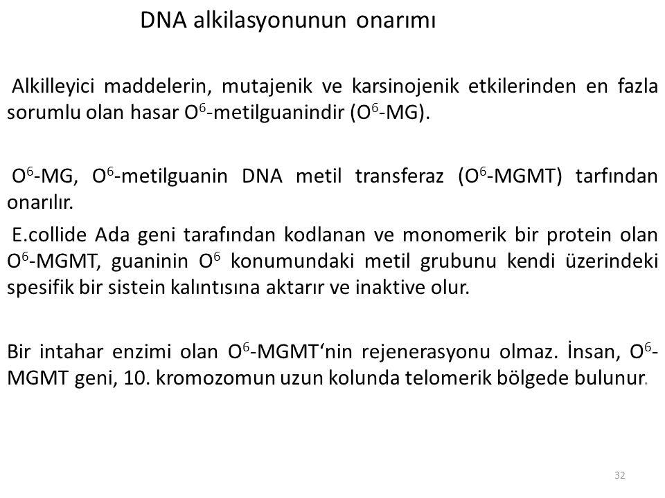 32 DNA alkilasyonunun onarımı Alkilleyici maddelerin, mutajenik ve karsinojenik etkilerinden en fazla sorumlu olan hasar O 6 -metilguanindir (O 6 -MG)