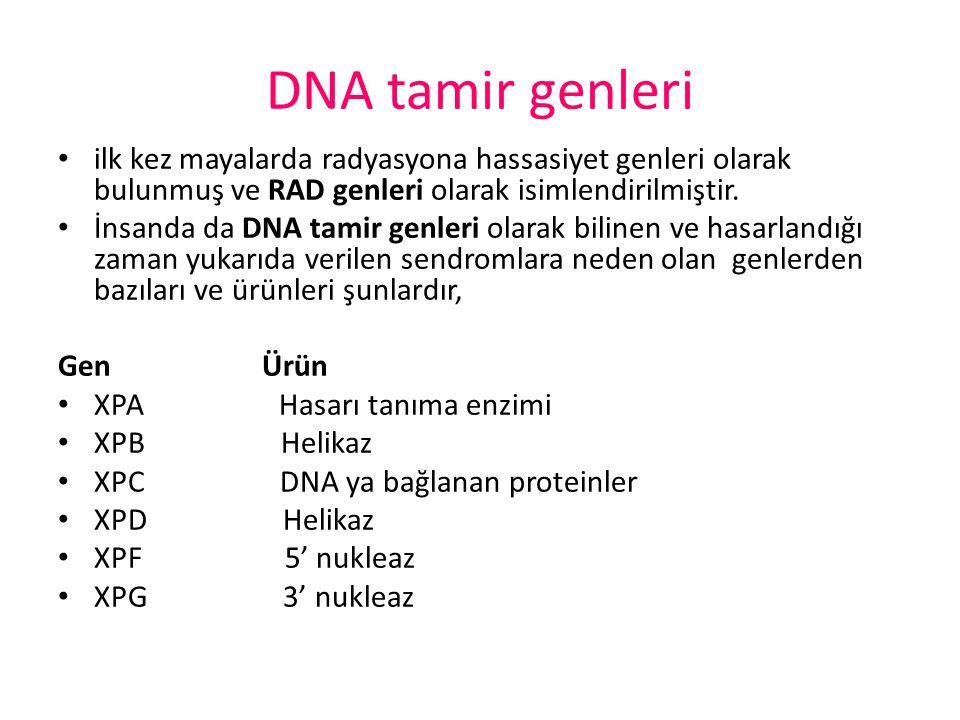 DNA tamir genleri ilk kez mayalarda radyasyona hassasiyet genleri olarak bulunmuş ve RAD genleri olarak isimlendirilmiştir. İnsanda da DNA tamir genle