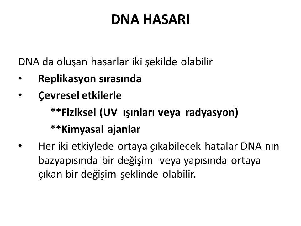 DNA da oluşan hasarlar iki şekilde olabilir Replikasyon sırasında Çevresel etkilerle **Fiziksel (UV ışınları veya radyasyon) **Kimyasal ajanlar Her ik