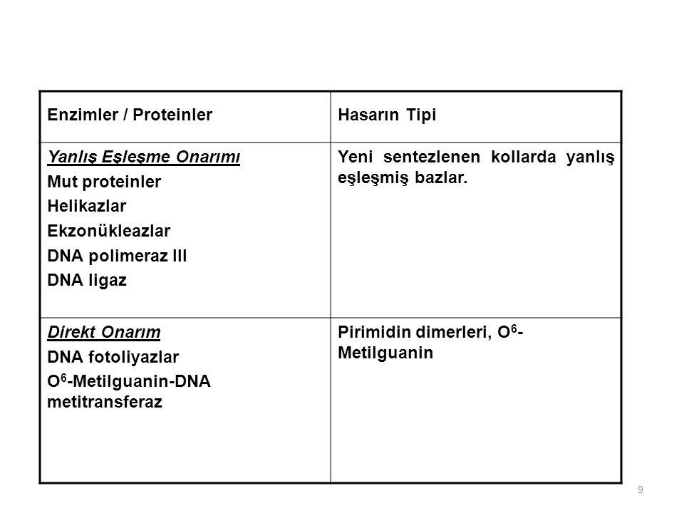 9 Enzimler / ProteinlerHasarın Tipi Yanlış Eşleşme Onarımı Mut proteinler Helikazlar Ekzonükleazlar DNA polimeraz III DNA ligaz Yeni sentezlenen kolla