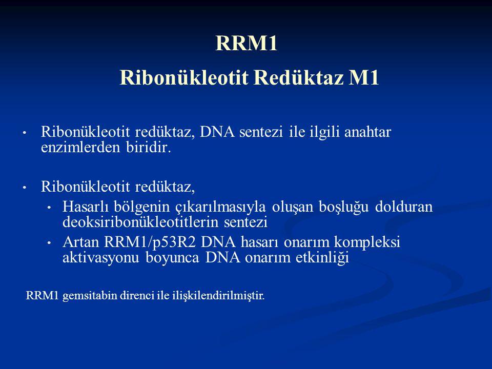 Nükleotid eksizyon onarım aşamaları ERCC1 - kesme RRM1- sentez