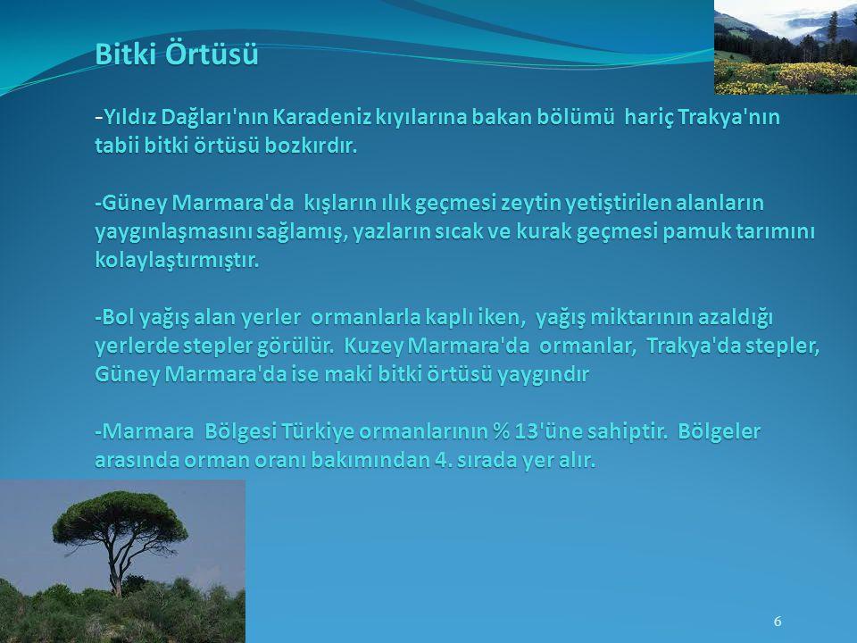 Bitki Örtüsü Yıldız Dağları'nın Karadeniz kıyılarına bakan bölümü hariç Trakya'nın tabii bitki örtüsü bozkırdır. -Güney Marmara'da kışların ılık geçme